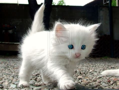 i love cats cute cat kitten pictures cute cat smile cats