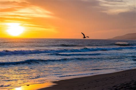 friendly beaches los angeles the best beaches in los angeles