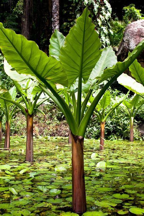 Seychelles Botanical Garden Best 25 National Botanical Gardens Ideas On
