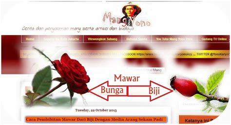 Biji Bunga Mawar cara pembibitan mawar dari biji dengan media arang sekam