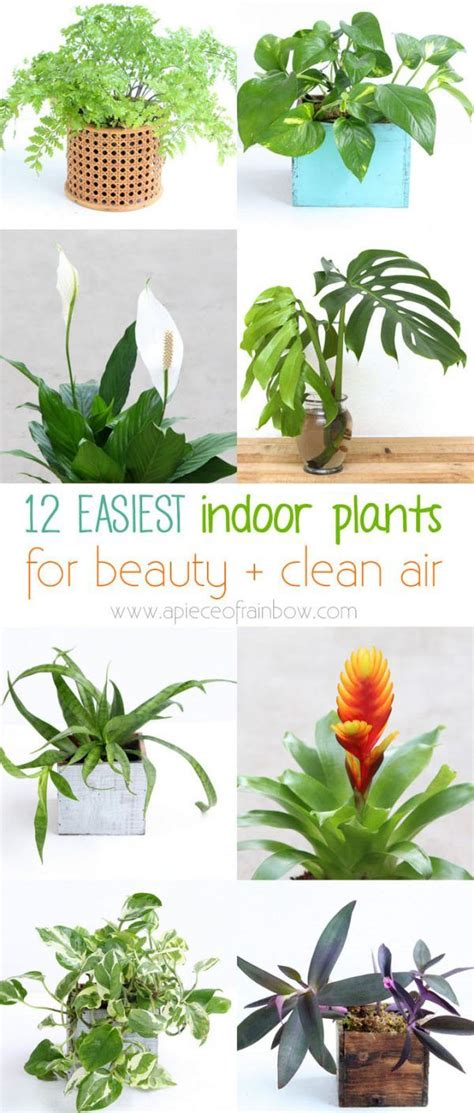 nasa best plants 12 easy indoor plants for beauty clean air nasa