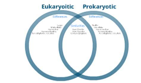 prokaryotes vs eukaryotes venn diagram prokaryotic vs eukaryotic by chris nakon on prezi