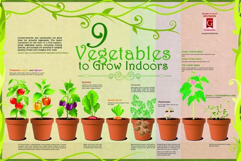 9 Vegetables to Grow Indoors   Visual.ly