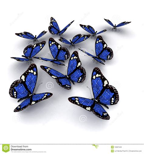 flores azules claras mariposa imagenes de archivo imagen 2050474 mariposas azules im 225 genes de archivo libres de regal 237 as