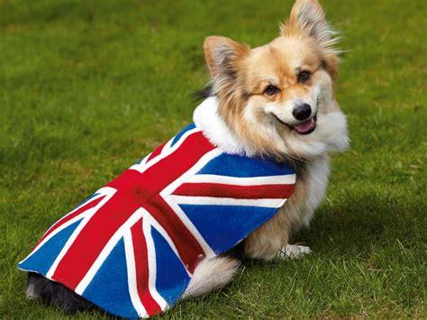 royal puppy how to make a royal coat