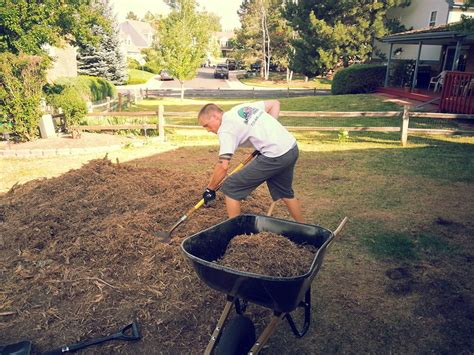 clean up backyard yard waste removal landscaping clean up