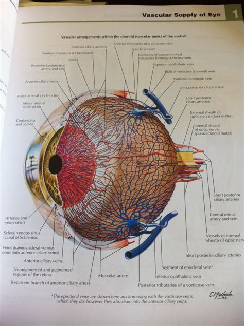 netter s anatomy coloring book plate 1 5 wedevine seetco 187 netter atlas of anatomy free