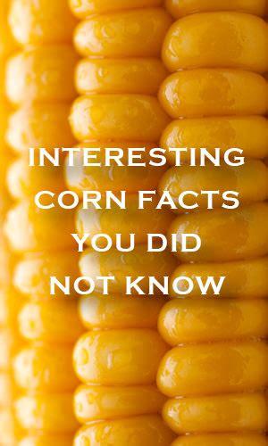 interesting corn facts