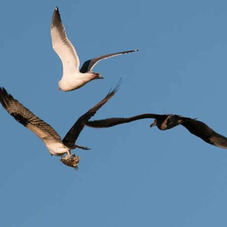 why do birds migrate california academy of sciences