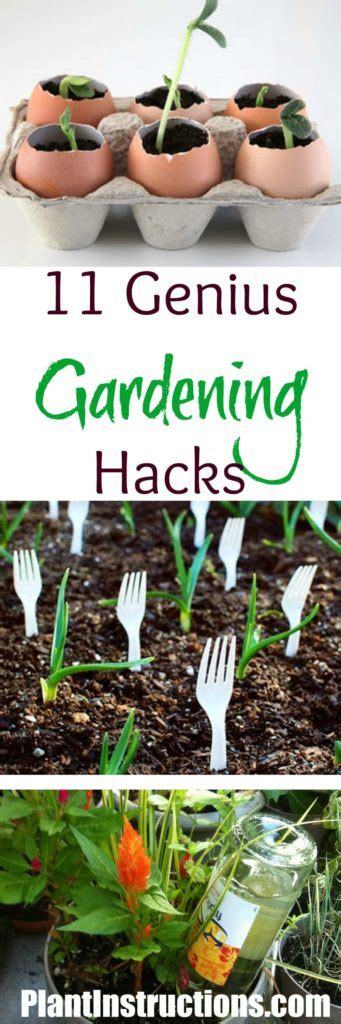 Gardening Hacks 11 Gardening Hacks You Need To Right Now Plant