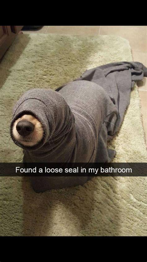 Funny Doge Memes - funny dog memes xd pinterest funny dog memes dog