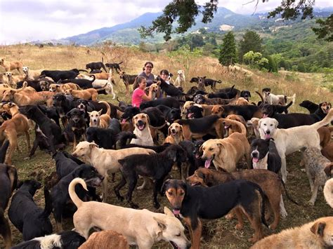 puppy land costa rica s land of the strays is a canine paradise where nearly 1 000 dogs