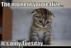 Tuesday Funny Memes - its tuesday meme