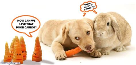 dogs eat carrots a carrot pictures freaking news