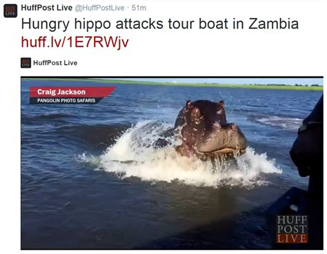 youtube video of hippo chasing boat friday a hungry hippo and a song willem s planet