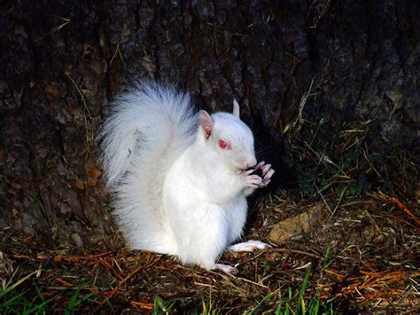 Tree Ground Blind Jumping Jacks Or Squirrels Facts For Kids Wild Life