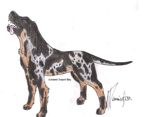 how to a catahoula leopard how to draw catahoula
