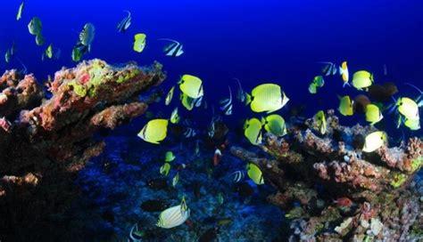 los peces de la 8483835460 c 243 mo respiran los peces y por d 243 nde lo hacen animales
