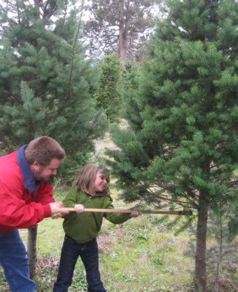marin and sonoma counties california christmas tree farms