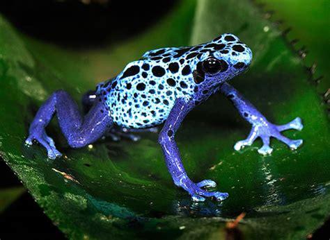 imagenes animales exoticos hermosos animales presumen sus hermosos colores en im 225 genes