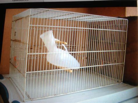 la gabbia inserzioni pappagallo in gabbia foto immagini i vostri successi