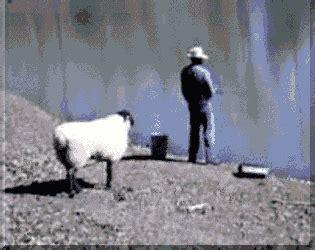 Komik Counting Sheep giflerderyasi komik hayvan gifleri