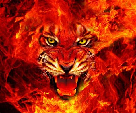 fire lion king cats animals background wallpapers