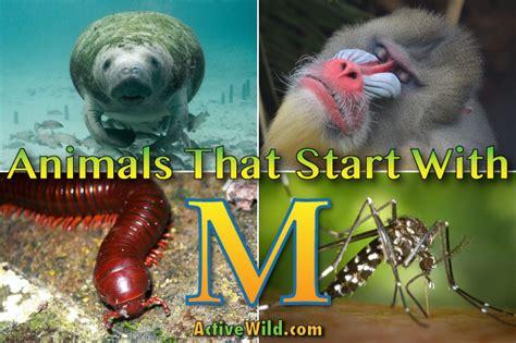 animals that start with u list of amazing animals animals that start with m list of amazing animals