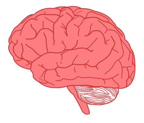 brain clipart free to use domain brain clip