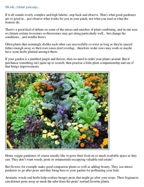 companion vegetable gardening vegetable gardening plant combinations companion planting