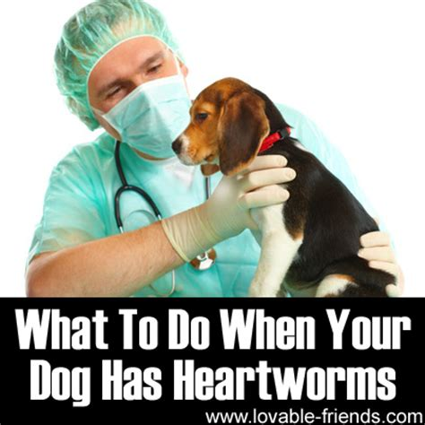 what to do when your has puppies what to do when your has heartworms lovable friends