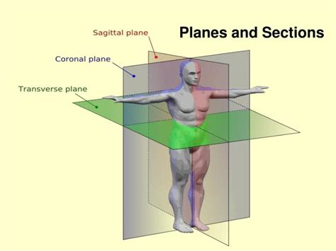 cross section plane ppt unit c human body systems powerpoint presentation