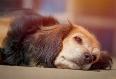 seizures in dogs signs of epilepsy in dogs petmd