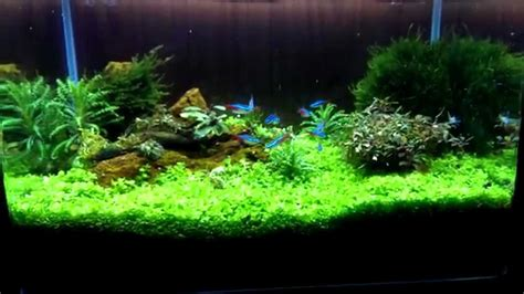 aquascape youtube semak samun aquascape youtube