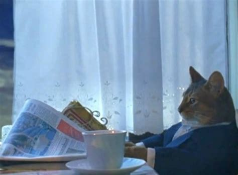 I Should Buy A Boat Meme - i should buy a boat cat know your meme