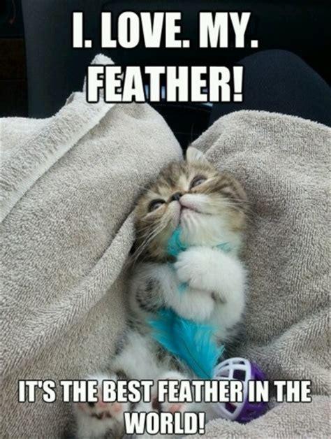 Happy Kitten Meme - happy kitten has a feather wanna smile