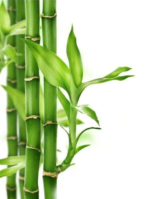 imagenes zen bambu 17 mejores im 225 genes sobre canyes de bamb 218 en pinterest