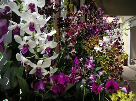 Orchid Garden by Brunei Traveller Orchid Garden Kuala Lumpur