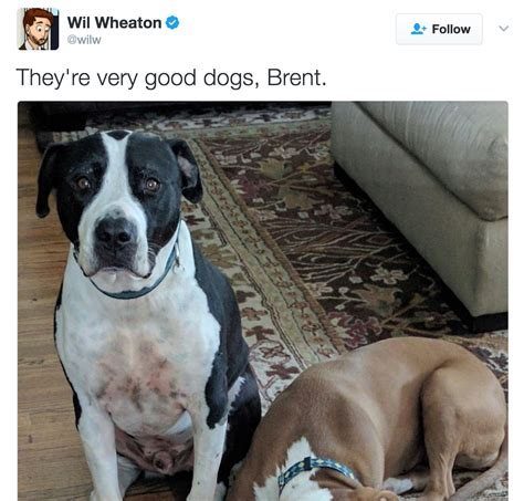 dogs brent they re dogs brent wil wheaton they re dogs brent your meme