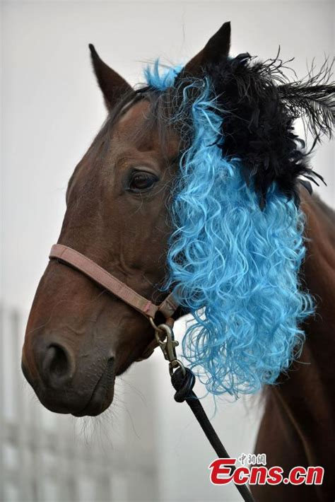 hairstyles for horses horses get prepared for racing with fashion hairstyles 2
