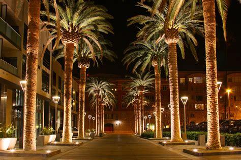 san jose tree lighting california palm trees on palm trees palms and