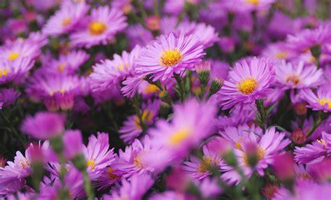 fiori di settembre fiori di settembre ecco i pi 249 belli da scegliere per la