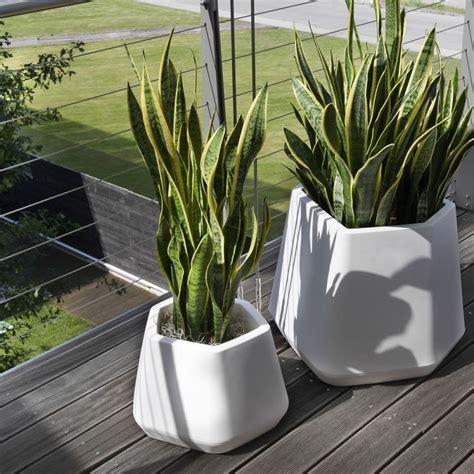 vasi per piante in resina offerta vasi per piante resina versilia promozione vasi