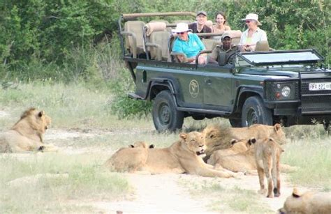 A Marvelous Take On The Safari Look With Out Of Africa by Lions Often Take No Notice Of The Safari Vehicles