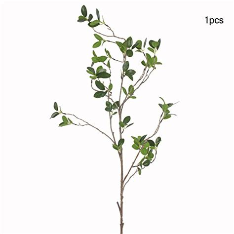 Eukalyptus Pflanze Kaufen 97 by Gartenausstattung Jarown G 252 Nstig Kaufen Bei