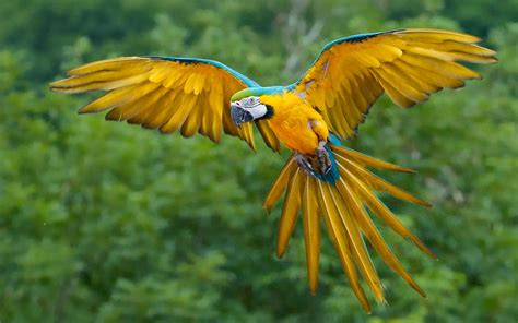 wallpaper macaw bird wallpapers