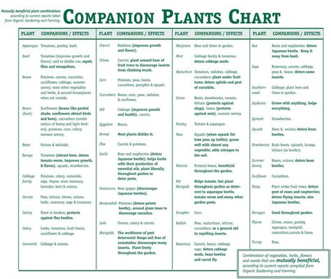 Https Www Earlmay Com Media Cms Companionplantschart Companion Gardening Layout