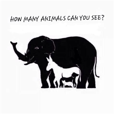 Can See What You Search How Many Animals Can You See In The Picture Forum Nigeria