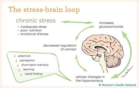 How To Detox Your Brain Caroline Leaf by 426 Best Detox Your Brain Emotions Dr Caroline Leaf