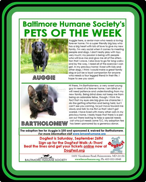 Looks Of The Week Fabsugar Want Need 15 by Pet Adoption In Baltimore Md